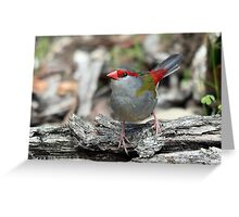 Red-browed Finch Greeting Card