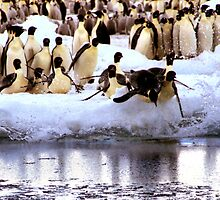 Emperor Penguins Going Fishing by Carole-Anne