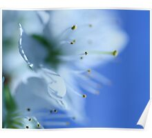Blossom in Blue Poster