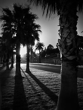 Palm Sunrise by Andrew (ark photograhy art)