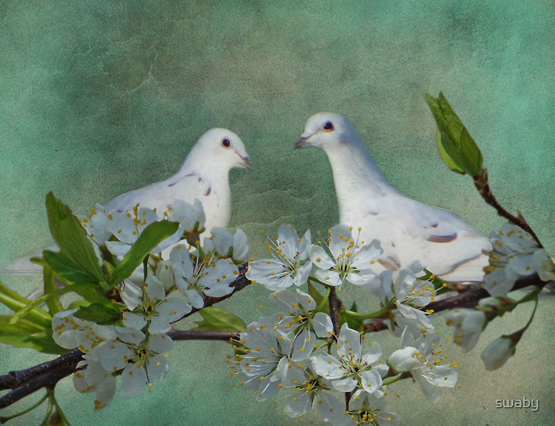 A Spring Thing by swaby