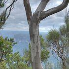 Blue Gum View, Blackheath, NSW, Australia by Adrian Paul
