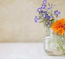 Marigold and Lobelia in a jar vase by Hege Nolan
