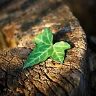 Green Leaf by Ant Parkes