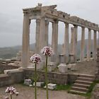Pergamon by Jamie Shirlaw