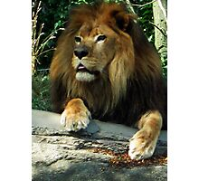 Guardian of the Savannah and the New York Public Library Photographic Print