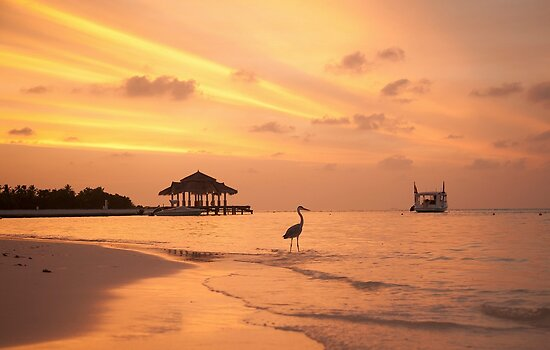 Maldivian Sunset by Shari Mattox