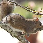 Squirrel Resting by Brenda  Meeks
