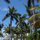 """""""Palm Trees and Power lines"""" by mls0606"""