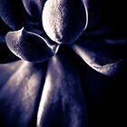 Succulent by Emma  Gilette