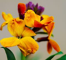 Wallflower by JEZ22