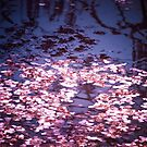 Spring&#x27;s Embers - Cherry Blossom Petals on the Surface of a Pond by Vivienne Gucwa