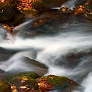 Smoky Mtn Autumn Stream - 398 by   Paul W. Faust