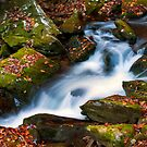 Smoky Mtn Autumn Stream - 494 by   Paul W. Faust