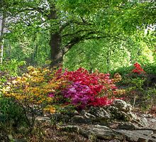 Azaleas Tricolor By the Tree by bannercgtl10
