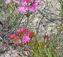 Mallee Forest and Wild Flowers by Geoffrey Higges