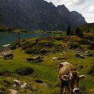 Grazing beneath the Alps by maybs