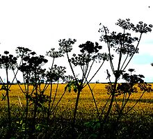 Hemlock Skyline by Sally J Hunter