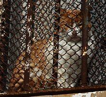 Ginger in Jail, Sancti Petri, Spain 2012 by Timothy Adams