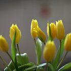 tulip by mrivserg