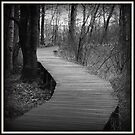 A Walk in the Woods by BarbL