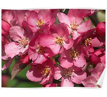Apple Blossom Time Poster