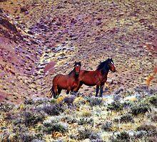 Wild Horse Pair by SB  Sullivan