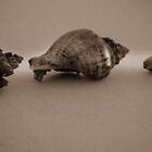 Three Shelly's (Hermit crabs) on the dock by KSKphotography