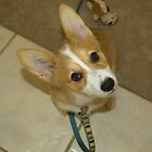 Teggie the Corgi, Cuteness Overload by mermaidsbite