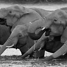 Drinking buddies by Explorations Africa Dan MacKenzie