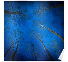 Blue Trees Poster