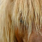 Shaggy Pony by Monte Morton