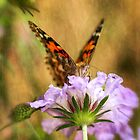 Portrait of a Painted Lady by Saija  Lehtonen