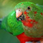 Young King Parrot by ADAMAS