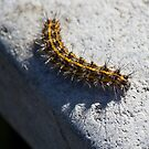 Caterpillar by Brenda  Meeks