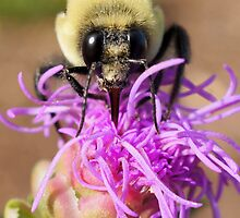 A Bumble Bee by Betsy  Seeton