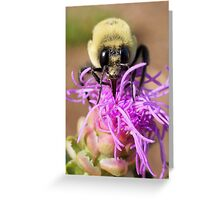 A Bumble Bee Greeting Card