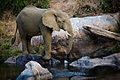 The Watering Hole by Michael  Moss