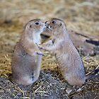 Prairie Dog Love by Don Arsenault