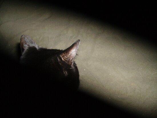 Matrix Kitty by nayohme