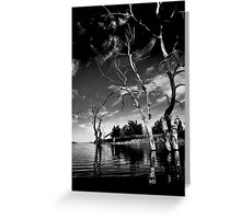Dead Trees in the water. Aurora reservoir. Colorado. #10 Greeting Card