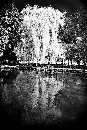 The Willow by Joe Sheldon