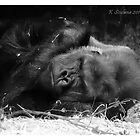Sleepy gorilla by bluetaipan