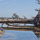 Old tree down on the beach by Brenda  Meeks