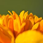 Yellow Flower close-up by Brenda  Meeks