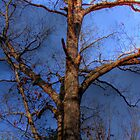 Tree Mapped Skies by Okeesworld