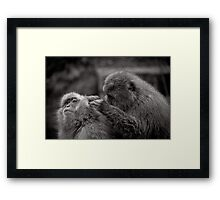 Five more fleas...err, I mean minutes! Snow Monkeys Framed Print
