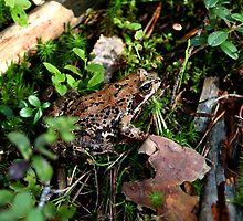 Frog by mrivserg