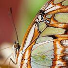 Dow Gardens Butterfly by Beth Mason
