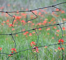Broken Fences by Carolyn  Fletcher
